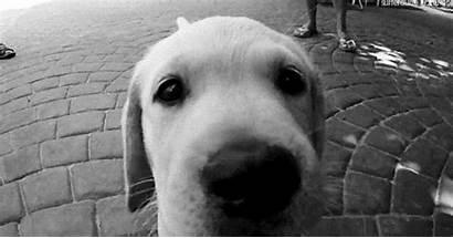 Puppy Dog Cachorro Filhote Fofo Labrador Cachorrinho