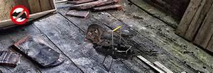 Ratten In Der Wand : schlag rattenfalle gardigo ~ Yasmunasinghe.com Haus und Dekorationen