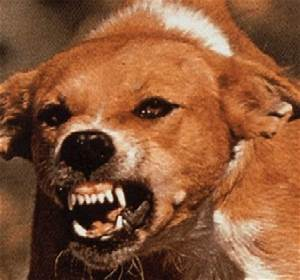 rabies symptoms in dogs