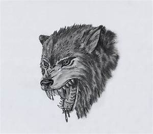 Wolf Head Drawings