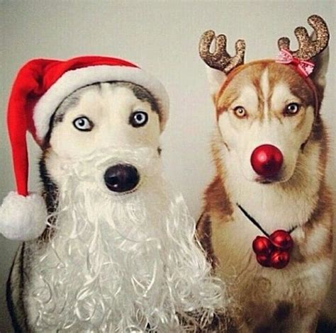 15 adorable animals that are cute to be santa s quot quot list