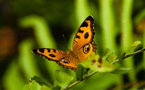 beautiful nature  animal wallpaper  images