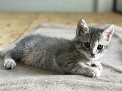 Kittens Adorable Adoption Jab