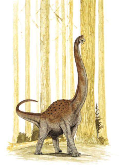 pelorosaurus pictures facts dinosaur
