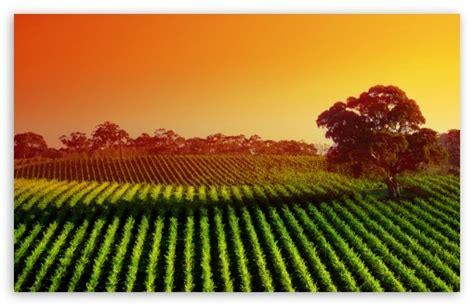 plantation  sunset  hd desktop wallpaper   ultra