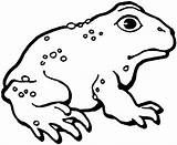 Toad Coloring Pages Printable American Frog Mario Template Cane Toads Designlooter Clipart Drawings Toadette 1186px 1443 69kb Getcoloringpages Templates sketch template