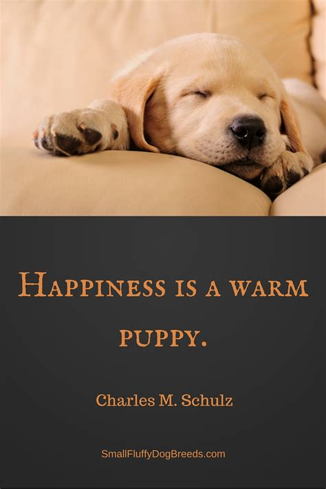 quotes  dogs great quotes  mans  friend