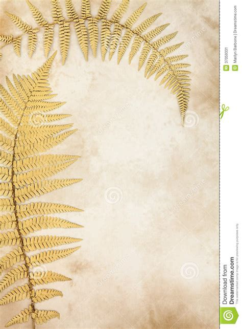 gold leaf design golden leaf stock image image of leaves parchment