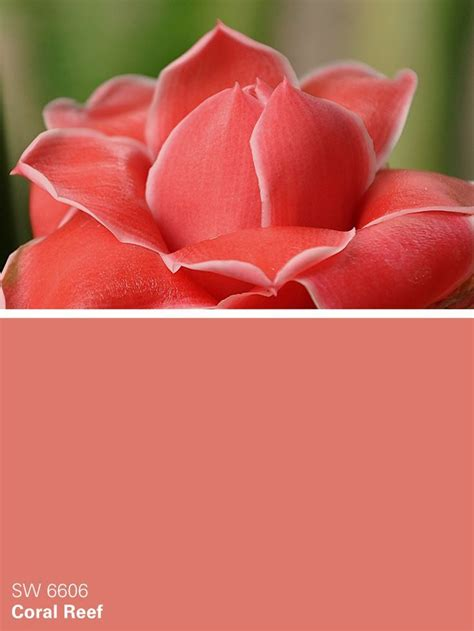 sherwin williams pink paint color from the buoyant