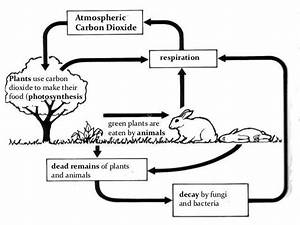 The Basic Carbon Cycle  Houghton Considers That Because