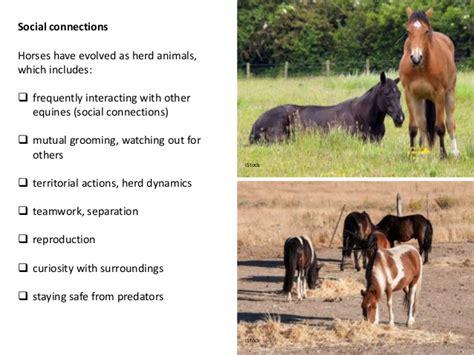 horses enrichment introduction horse social animals