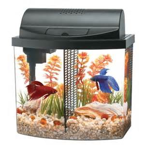 scales tails wings and things betta tank reviews