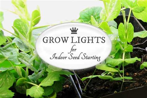 seed starter grow lights seed starting 101 sowing seeds indoors empress of dirt