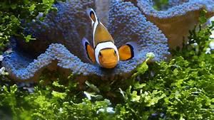 Was Braucht Man Alles Zum Streichen : was braucht man alles f r ein salzwasseraquarium ~ Markanthonyermac.com Haus und Dekorationen