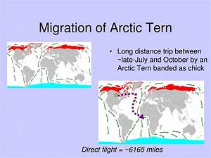 PPT - Life in the Polar Regions PowerPoint Presentation ...