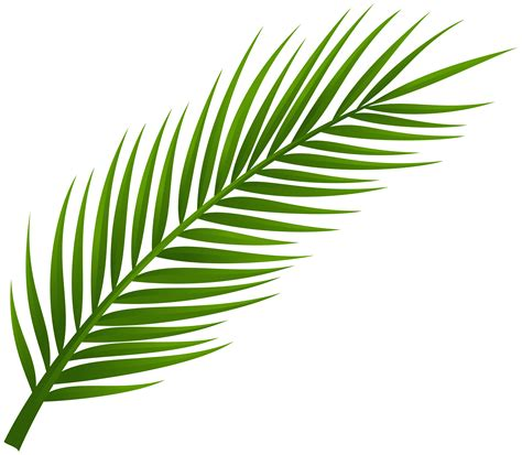 Tropical Leaves Clipart  Free Download Best Tropical