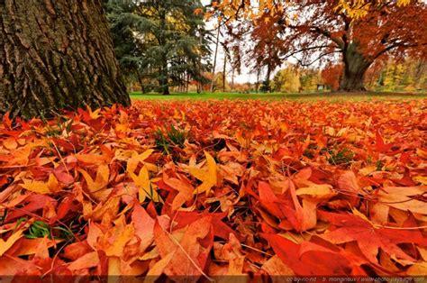 tapis de feuilles mortes tapis de feuilles mortes 5 bois de vincennes