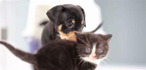 video alerta de ternura cachorros de gatos  perros se