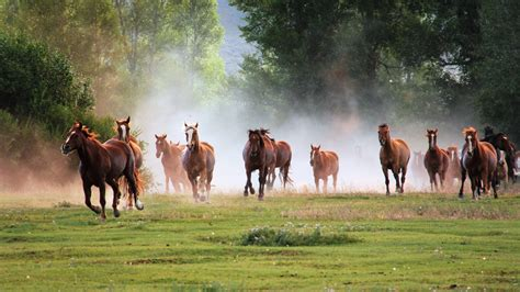 Horses Wallpapers, Pictures, Images