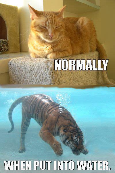 cat     water funny cats memes