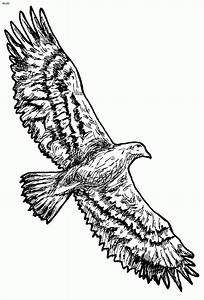 Flying Hawk Drawing At Getdrawingscom Free For Personal