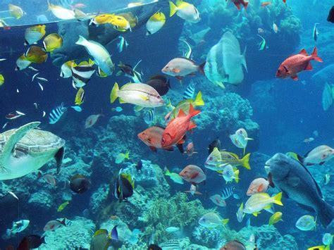 水族館の南国の魚