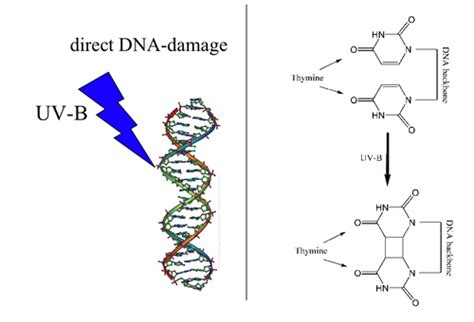 An Introduction To Molecular Biology/replication Of Dna