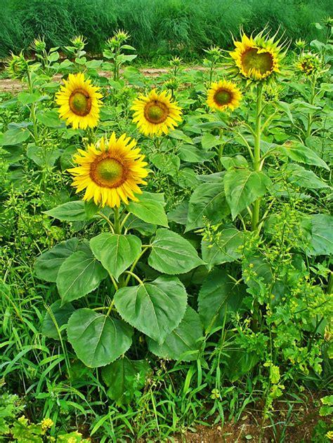 Dekoideen Herbst Garten by Deko Ideen Garten Mit Herbstblumen F 252 R Eine Gute Stimmung