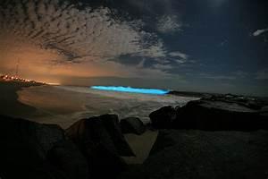 Glowing Algae Make A Nice Nightlight