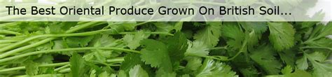 cambs cuisine your vegetable grower