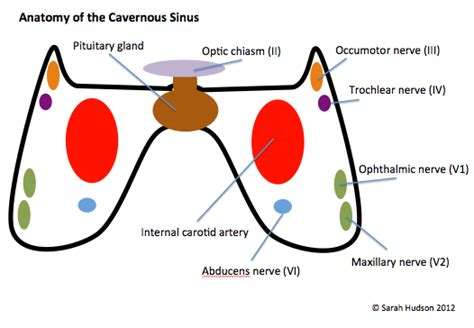 cavernous sinus syndrome mrcp revision notes