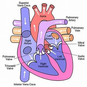 Artificial Heart Design Challenge