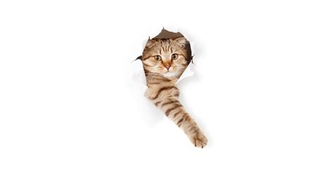 cat  paper hole
