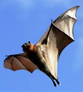 Cute Bats Flying