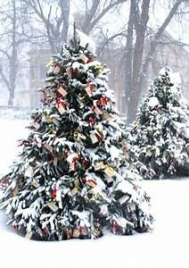 27 best images about Snow Covered Christmas Tree on