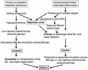 Pathophysiology Of Edema Formation In Ns  In Disorders