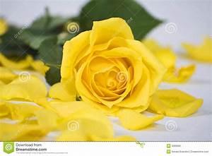 Gelbe Rose Bedeutung : gelbe rose stockfoto bild von bunt farbe hintergrund 3285692 ~ Whattoseeinmadrid.com Haus und Dekorationen
