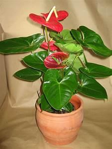 Plante Fleurie Intérieur : plantes vertes fleuries d int rieur l 39 atelier des fleurs ~ Premium-room.com Idées de Décoration