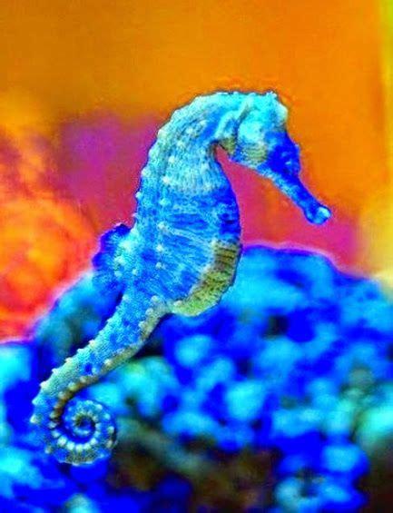 agababy jongleur acrobat dancer google seahorse