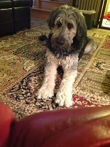 17 Best images about My next dog on Pinterest | Vegan ...
