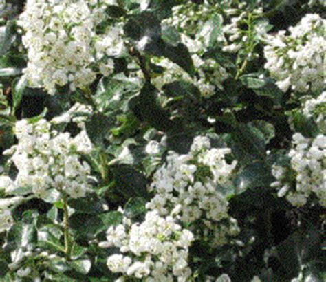 kamerplant met rose bloemen index of images bladhoudende planten word bestanden