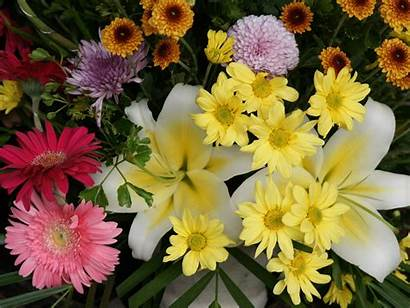 Flowers Wallpapers Cool Flower Beauty Daisies