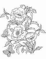 Coloring Poppies Pages Poppy Flower Blossom Printable Amapolas Drawing Para Colorear Template Adult Flowers рисунок Drawings Dibujos рисунки Flores Painting sketch template