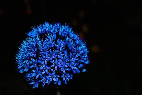 agosto blu  mare profondo fito
