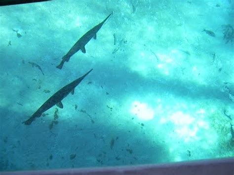 Glass Bottom Boat Tours In Florida by Silver Springs Ocala Florida Glass Bottom Boat Tour