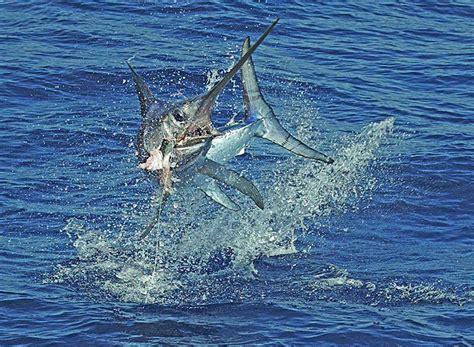 fishing florida deep sea keys islamorada fish marlin fun destin sport fly