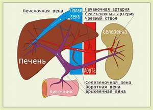 Артроз препараты улучшающие кровообращение