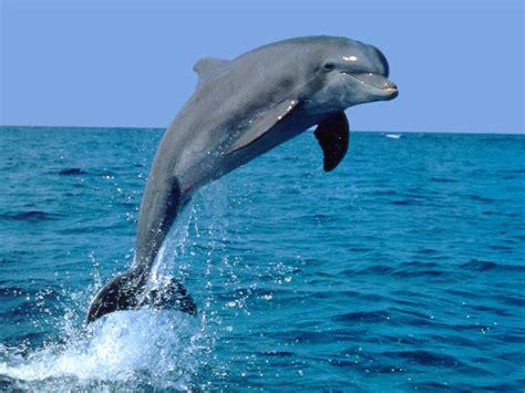 koleksi wheels dolphins whales and sharks rochelle moulton