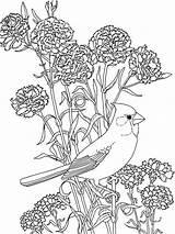 Coloring Flower Pages Peony Flowers Printable sketch template