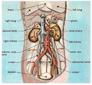 Kidney Pain And Location